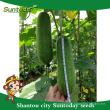Suntoday to plant a seed image vegetable agriculture heriloom company Organic wax gourd chieh-qua seeds(22001)