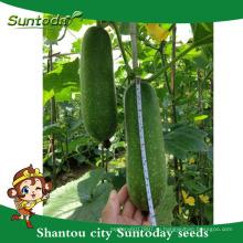 Suntoday посадить семена изображения овощного хозяйства heriloom компании органический воск тыква Цзе-кВА семена(22001)