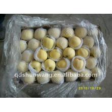2011 new crop fresh golden apple