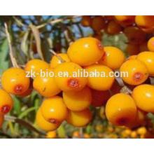 Boa qualidade Extrato de frutas Seabuckthorn Natural
