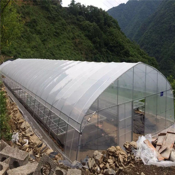 Single Span Plastic Film Greenhouse
