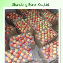 2015 Bulk Fresh Gala Apple From China with Competitive Price