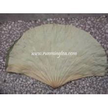 Thé à feuilles de lotus