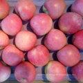 Boa qualidade de fresco Qinguan Apple