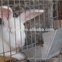 Alimentador de metal de conejo (8 cm, 10 cm, 12 cm)