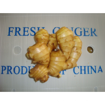 Verschiedene Größen von frischem Ingwer in verschiedenen Verpackungen