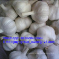 New Crop Raw Normal/Pure White Garlic 5.5cm