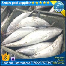 Frozen Tuna, tuna fish whole round, bonito tuna skipjack tuna