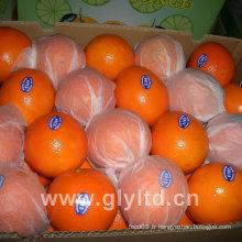 Nouvel an de Navel orange de première catégorie