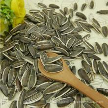 graines de tournesol rayées