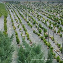 Landscaping & Decking Type and Fabric Material Weed Controle Fabric