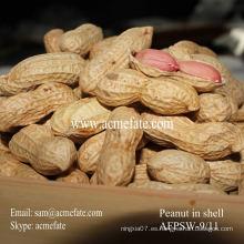 Nueva cosecha de cacahuete de shandong con cáscara 9/11
