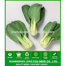 NPK10 Weiwen leaf vegetable seeds,pak choi seeds company,types of seeds