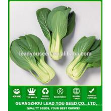NPK10 Weiwen семена листовой овощ,пак Чой компания семена,типы семян