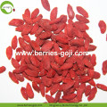 Factory Wholesale Dry Fruits Sun Dry Wolfberries