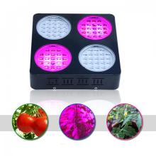 Super Power 252W LED coltiva la luce