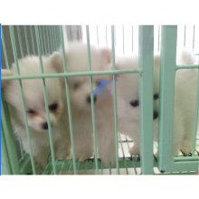 Cerca soldada con autógena para mascotas para perros y gatos (TS-E66)