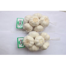 Big Size Fresh Garlic Jinxiang Crop, 2014 Harvest