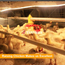 Tianrui design poultry housing system for broilers