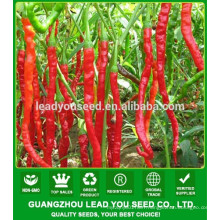 NP041 Shiwang China hot pepper seeds manufactory, seeds prices