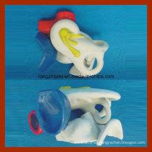 Modelo de expansión de mostrar la disección del oído medio