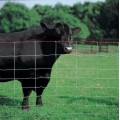 Heavy Zinc Coated Cattle Fence