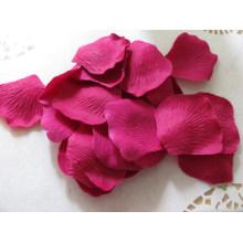 Fuchsia pétala de rosa seca