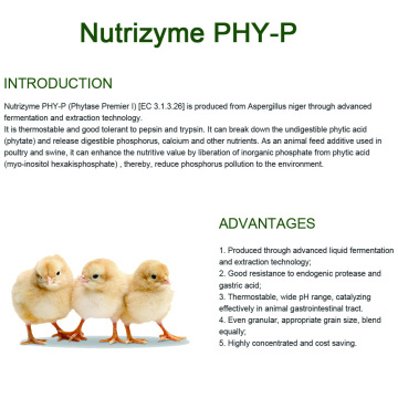 Thermostable and protease resistant Phytase for feed