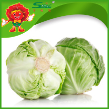 Grade A chou vert frais à vendre chou décoratif