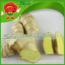 White Ginger supplier fresh frozen ginger