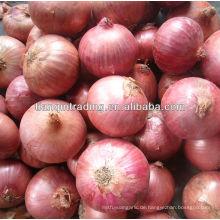 China rote kleine Zwiebel