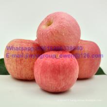 Shandong Origin New Crop FUJI Apple Prompt Shipment