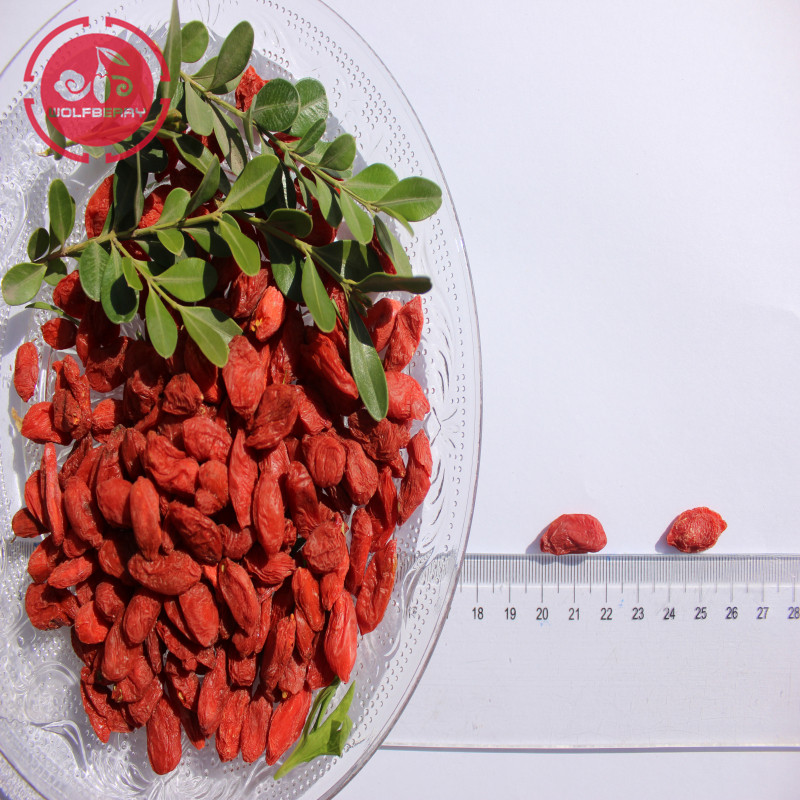 GMP Fábrica Best Selling Baixo pesticidas Goji Berries