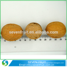Chinese Natural Dried Walnut Nut walnut unshelled walnut in shell for sale