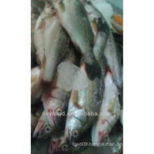 frozen sea bass price