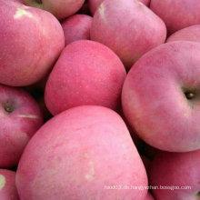 Professionelle Lieferant von chinesischen frischen Qinguan Apple