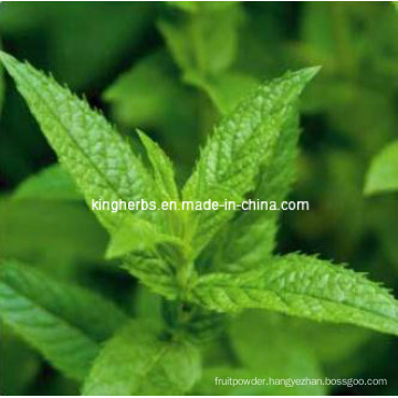 High Quality and Natural Menthol