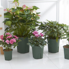 High Impact Plastic Flower Pot