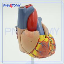 ПНТ-0400 медицинской науки школа сердца тренировочная модель сердца модель