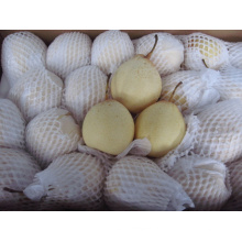 China 72/80/96/112 / 18kg / Cartón Ya Pear