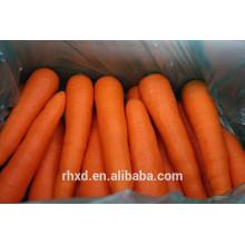 Farm Fresh Karotten Preis Export Karotten Erntemaschine