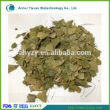 Dried Ginkgo Biloba Leaf (Yin xing ye)