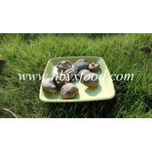 Getrocknete Gemüse Smooth Shiitake Pilz 1kg Beutel