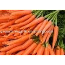 2011 новая свежая морковь