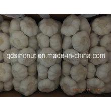 Alho branco puro Qualidade Seleta 1kg / Bag