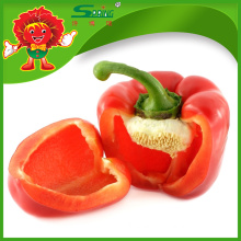 red pepper/color pepper price/red small round hot peppers