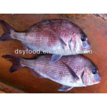 Frozen Red Seabream Fish
