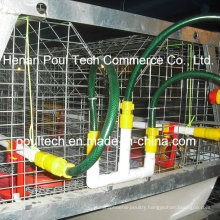 Little Chicken Chick Cage for The Poultry Farm