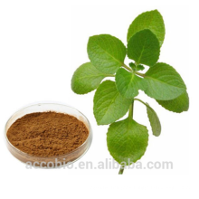 High Quality 100% Natural Certificated Organic Oregano Leaf Extract Powder