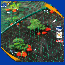 Plastic Netting with low price